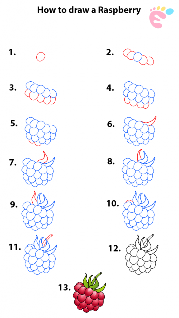 How to draw a Raspberry drawing 1