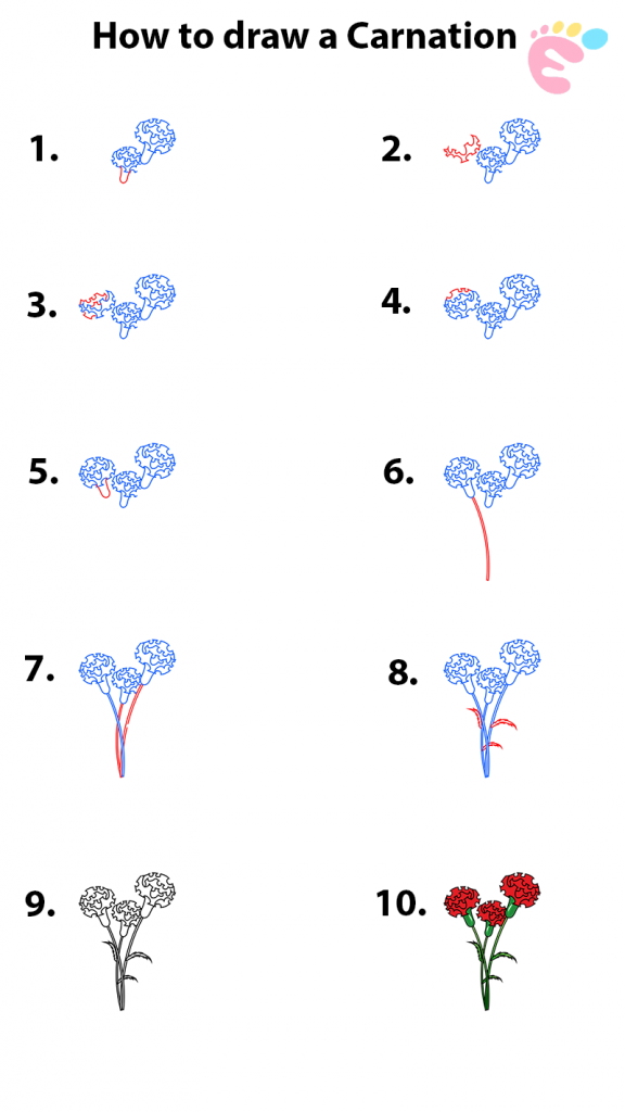 How to draw a Carnation drawing