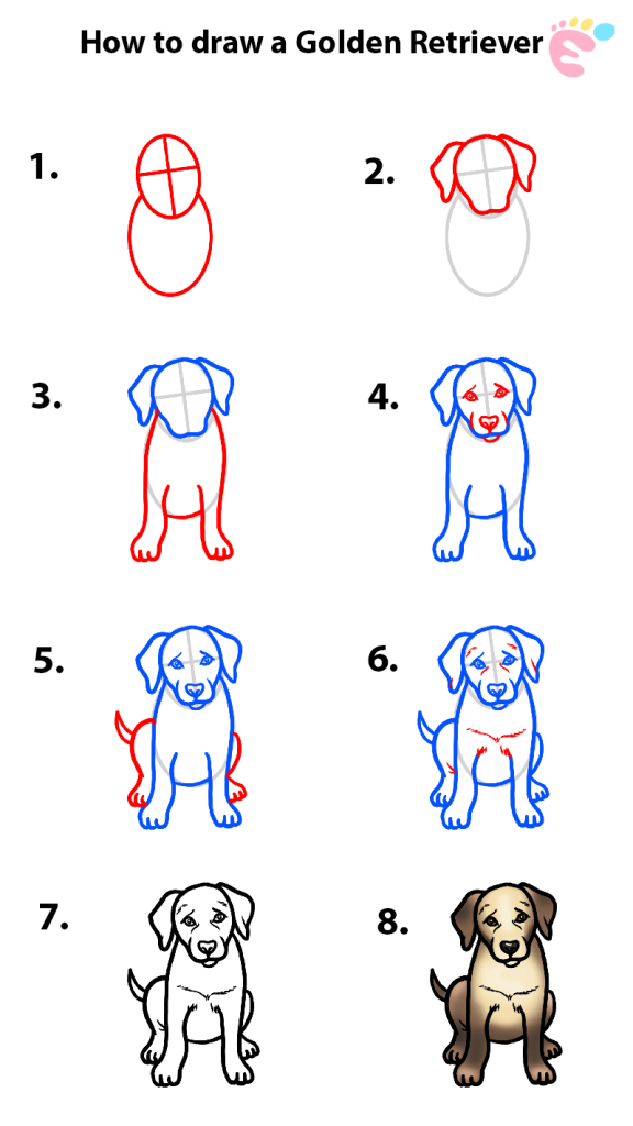 How to draw a Golden retriever drawing