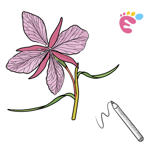 How to draw an Orchid drawing icon