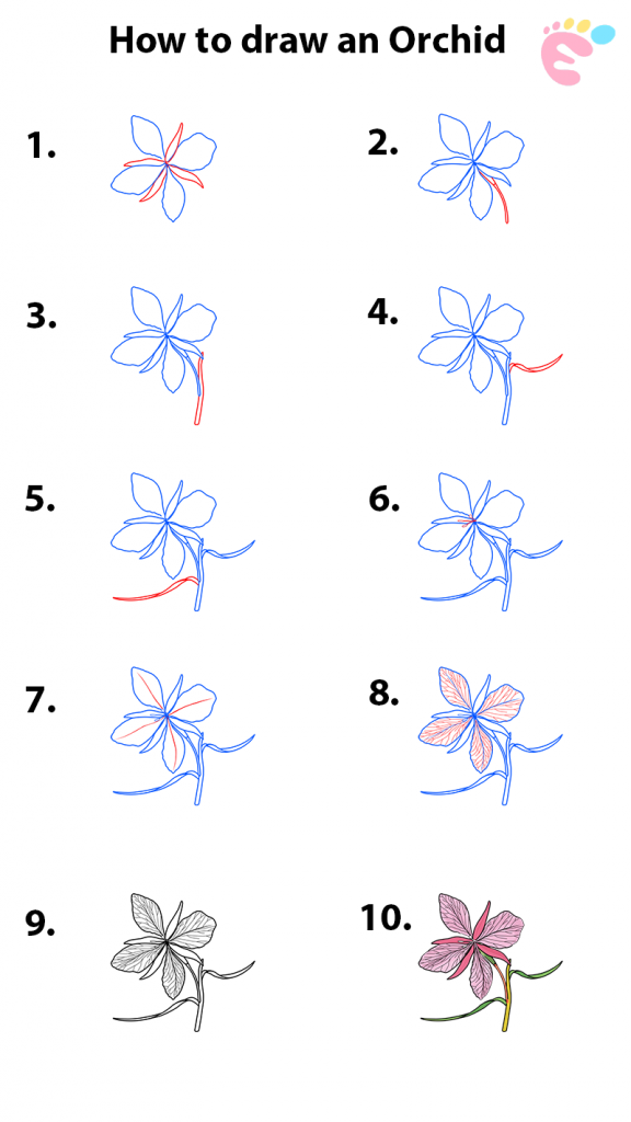 How to draw an Orchid drawing